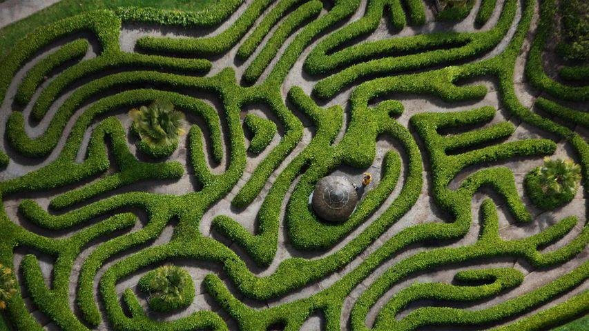 Aerial view of the cherry laurel maze in Glendurgan Garden, Cornwall, England