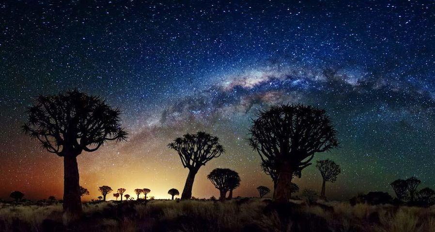 纳米比亚箭袋树林上空的银河