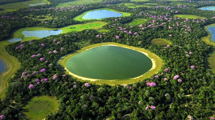 Das Feuchtgebiet Pantanal, Brasilien