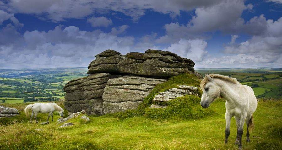 Zwei Ponys grasen in den Hügeln von Dartmoor, England – Adam Burton/Photolibrary ©