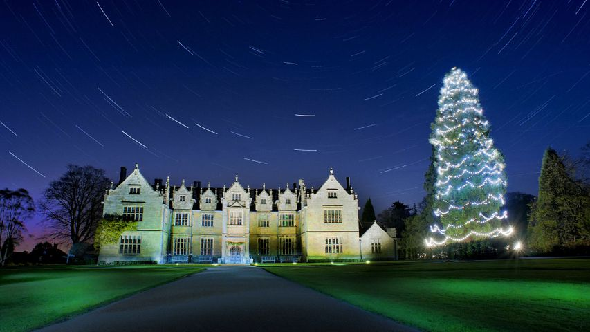 Star trails above the Christmas tree at Wakehurst, West Sussex