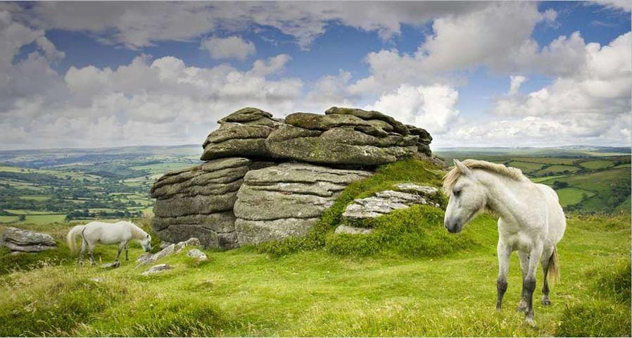 Ponies grazing at Chinkwell Tor - Adam Burton/Photolibrary ©