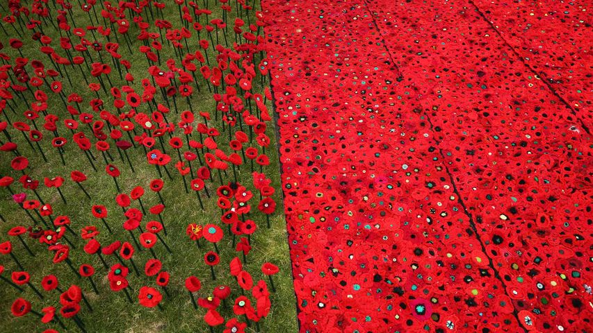 A field of knitted poppies at the RHS Chelsea Flower Show in 2016