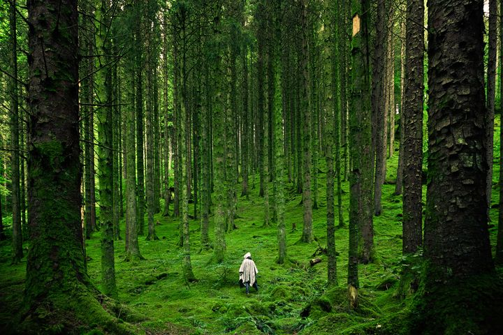 tree grass outdoor forest plant jungle green nature