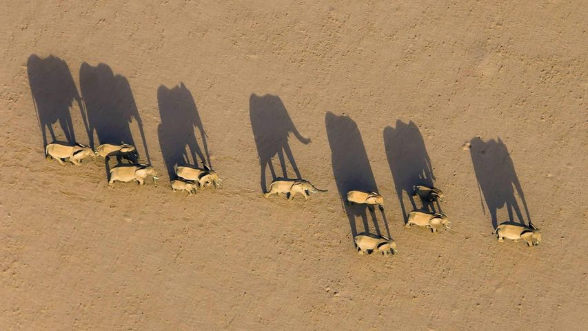 Elephant herd in Damaraland District, Namibia