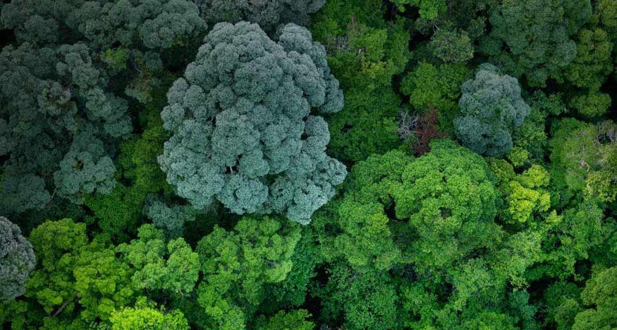 「空から見た熱帯雨林」マレーシア, ジョホール
