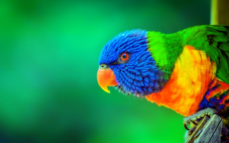 parrot animal bird colorful colored yellow bright wildlife