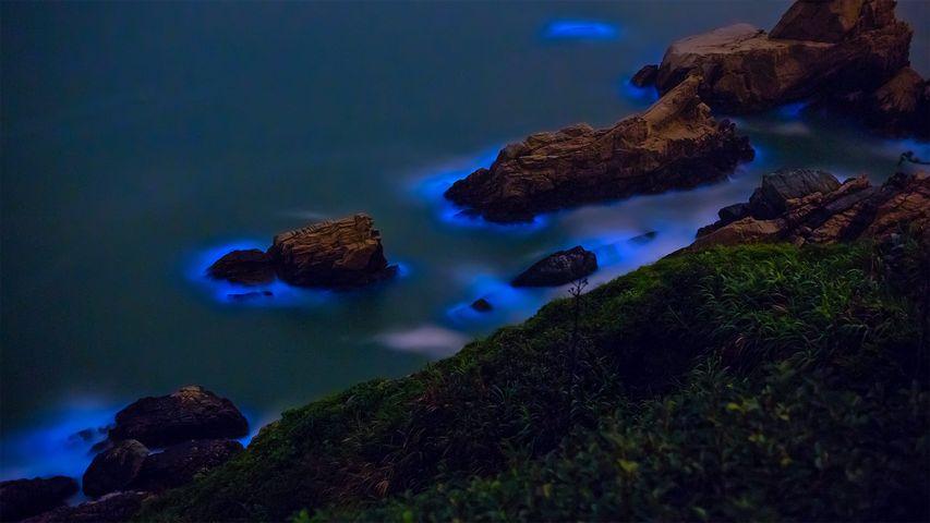 Bioluminescent algae along the shores of the Matsu Islands off the coast of Taiwan