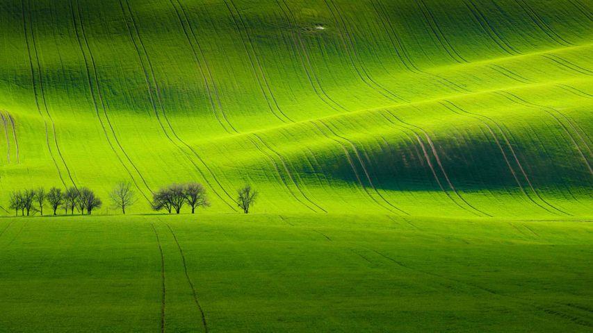 「南モラヴィアの丘陵」チェコ, キヨフ村