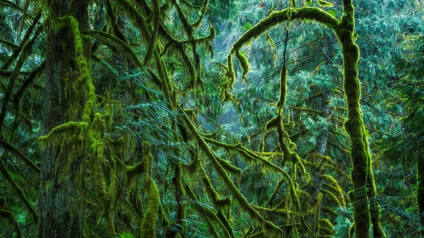 The Lush Rainforest of Cathedral Grove, Macmillan Provincial Park, B.C.