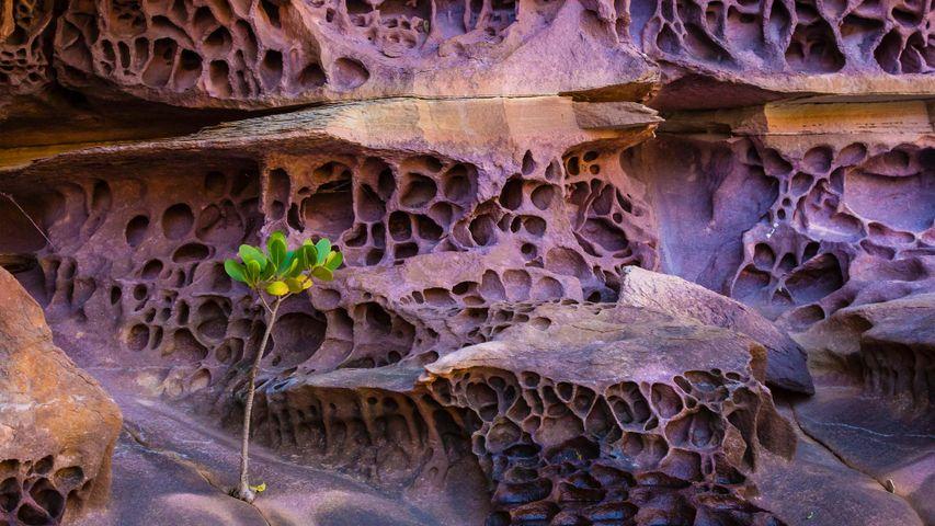 Wabenverwitterung in der Koolama Bay, Region Kimberley, Westaustralien