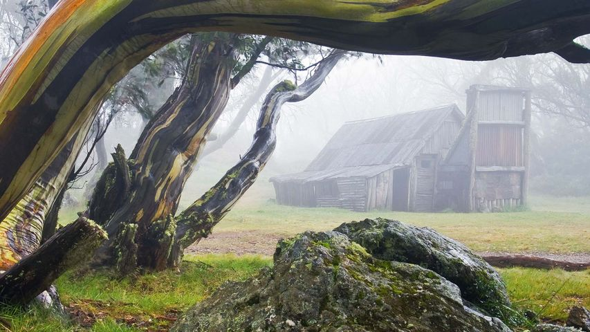 Wallace Hut and snow gums in Alpine National Park, Victoria
