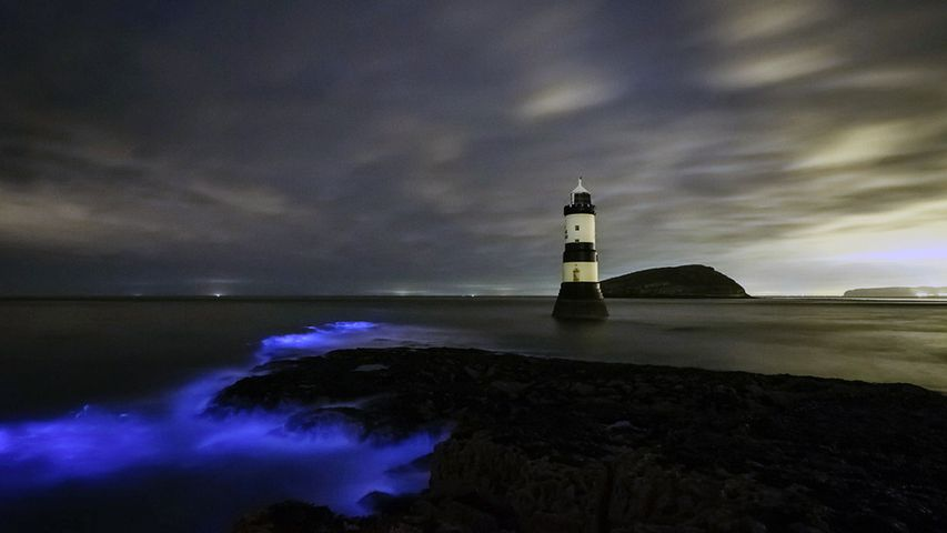 Phytoplanctons bioluminescents, Phare de Trwyn Du, Ile d'Anglesay, Pays de Galles