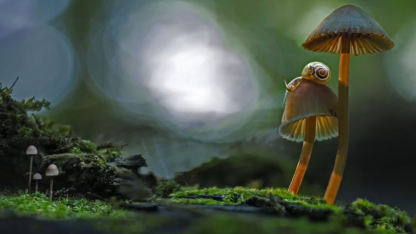 蘑菇上的蜗牛