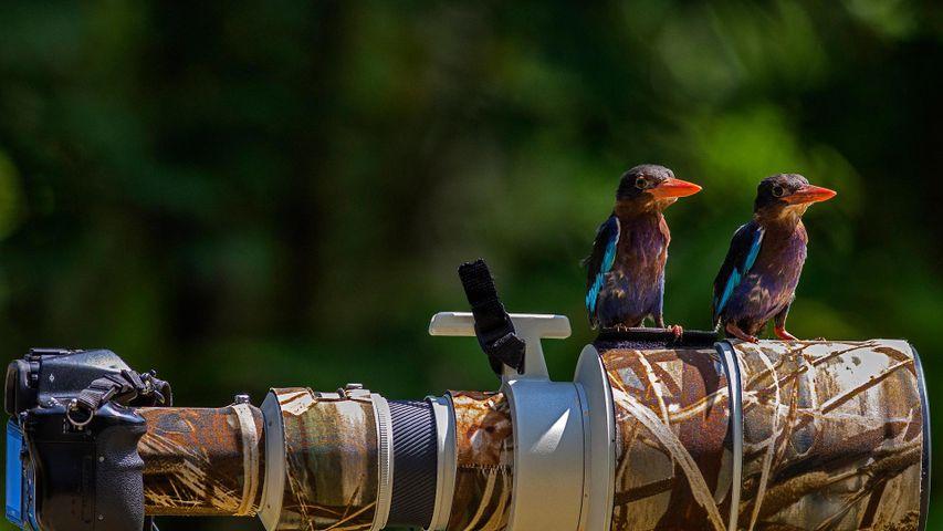 普通翠鸟在相机镜头上短憩