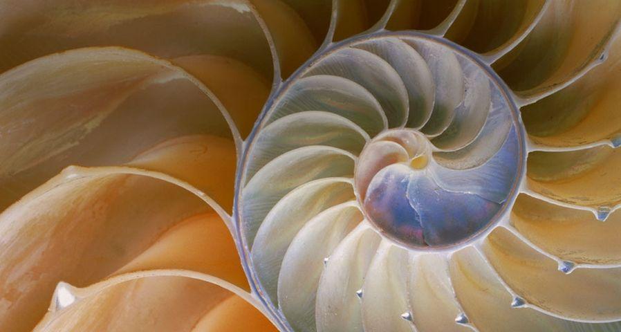 「オウムガイの螺旋」