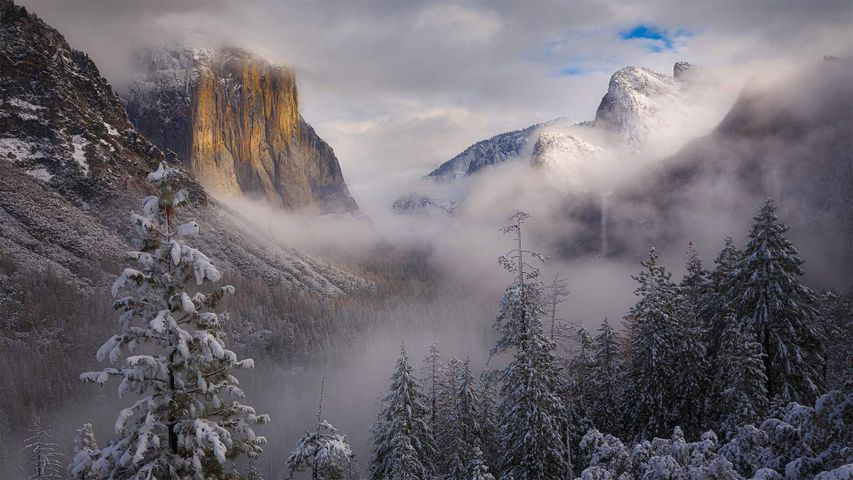 Clearing snowstorm, Yosemite National Park, California
