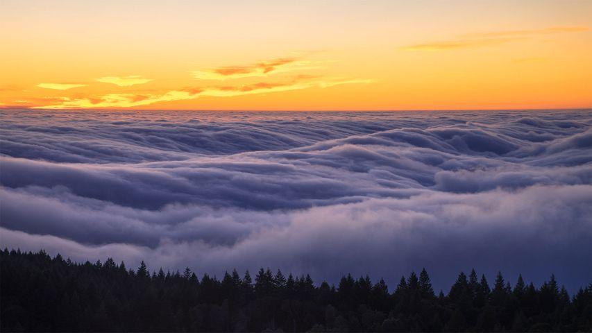Brouillard au-dessus du parc d'État de Mount Tamalpais, Californie, États-Unis