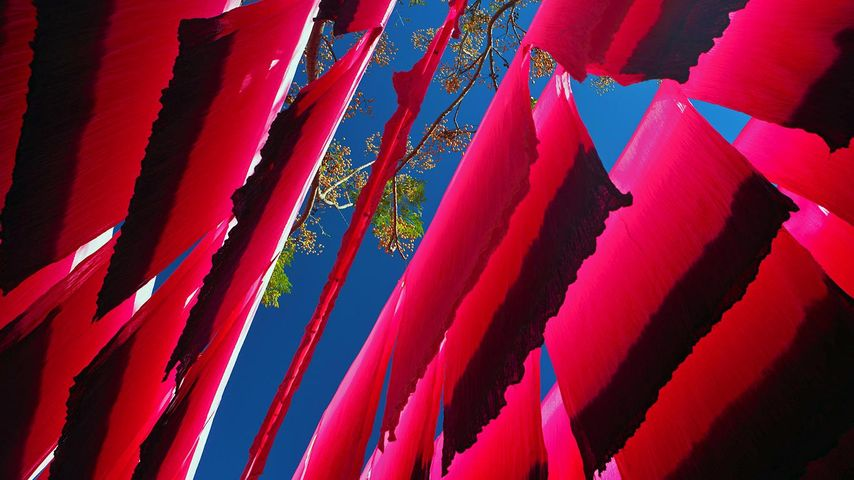 Dyed silk hanging to dry in Marrakech, Morocco