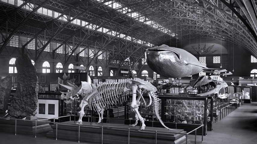 Smithsonian touring exhibition at the 1904 St. Louis World's Fair
