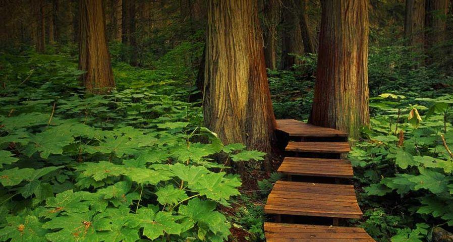 Boardwalk in Mount Revelstoke National Park, British Columbia, Canada