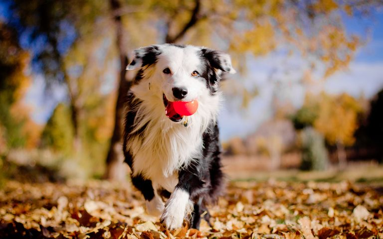 dog outdoor tree grass black white mammal colored