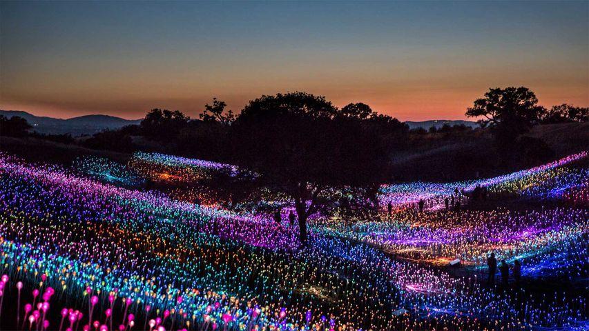 'Field of Light at Sensorio,' by Bruce Munro, Paso Robles, California