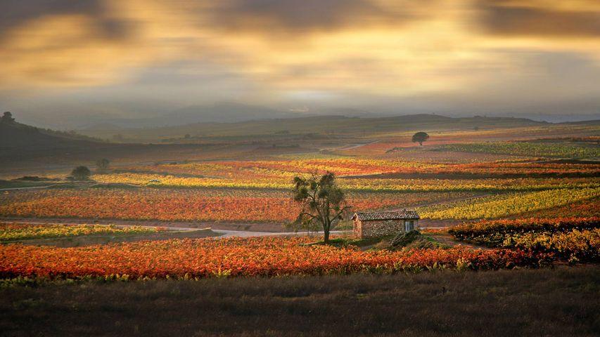 Amanecer sobre los viñedos de La Rioja