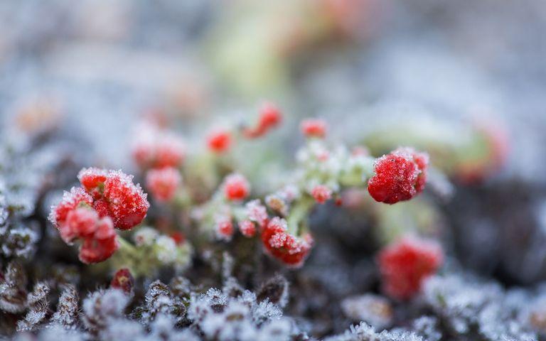 cake fruit strawberry frutti di bosco food flower alpine strawberry strawberries