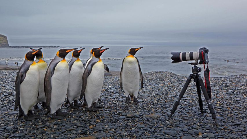 sky ground outdoor bird aquatic bird animal penguin king penguin