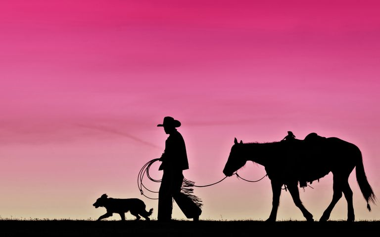 outdoor sky animal sunset dog silhouette horse day