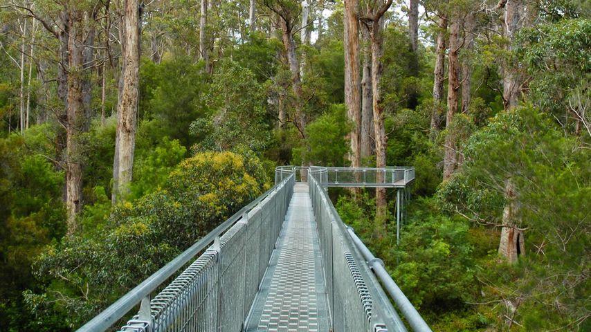 Valley of the Giants, Denmark, Western Australia