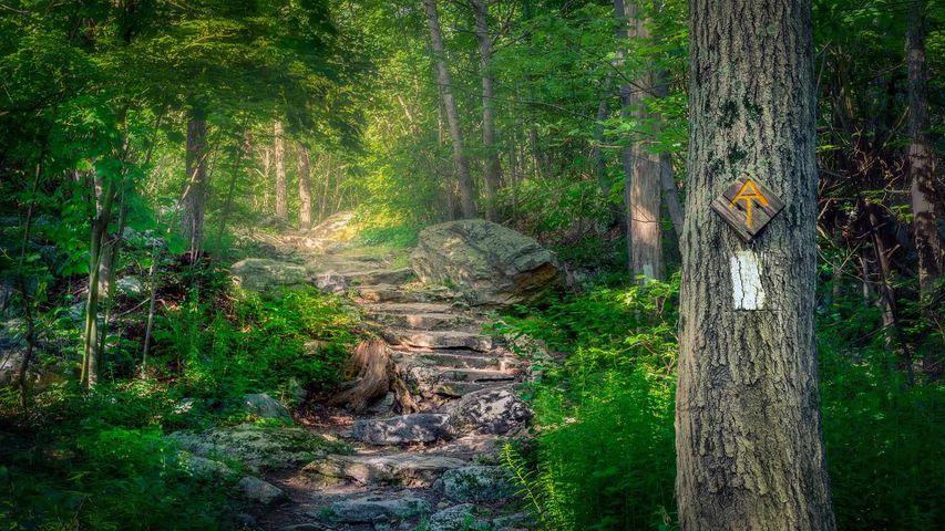 阿巴拉契亚国家步道,新泽西州斯托克斯州立森林