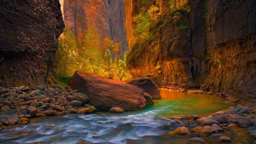 锡安国家公园的处女河,犹他州,美国