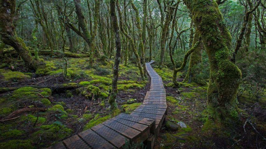 Erhöhter Holzbohlenweg im Cradle-Mountain-Lake-St.-Clair-Nationalpark, Tasmanien, Australien