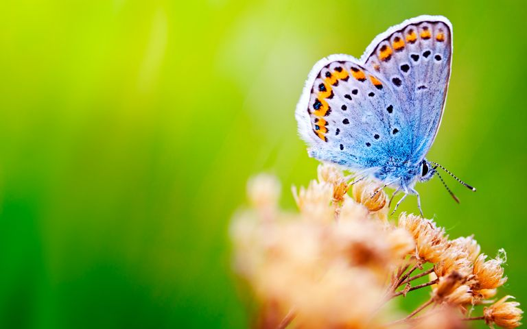 butterfly animal flower moths and butterflies invertebrate insect