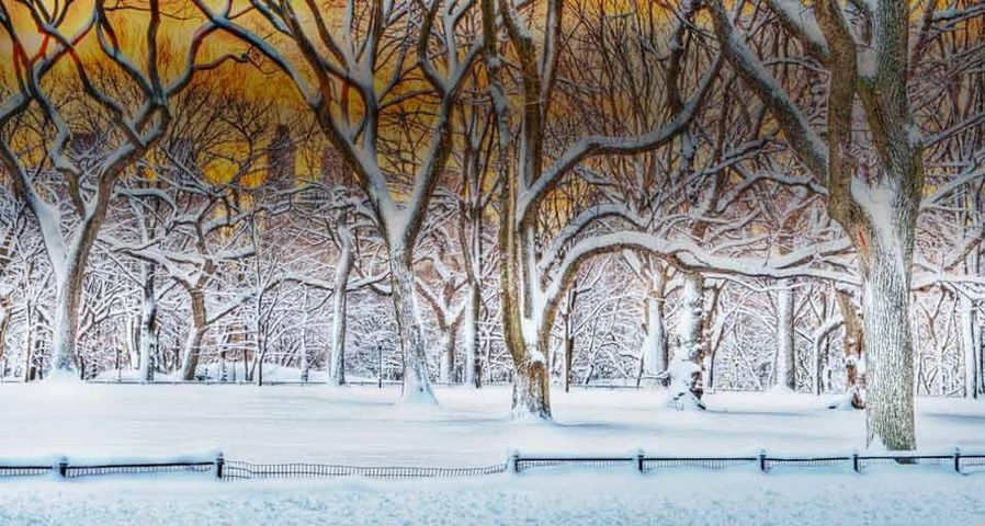 Sunrise in Central Park after a snowstorm in New York City, New York