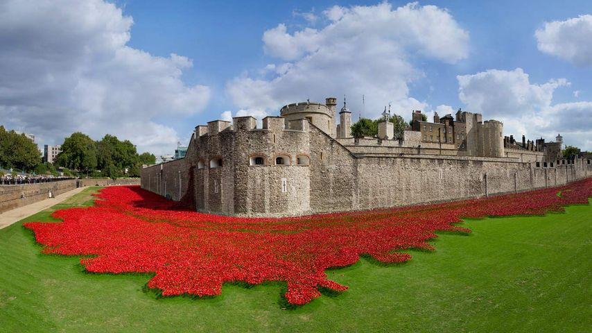 Tower of London surrounded by ceramic poppies, art installation created by Paul Cummins in honor of the 100th anniversary of the beginning of World War I, London, England