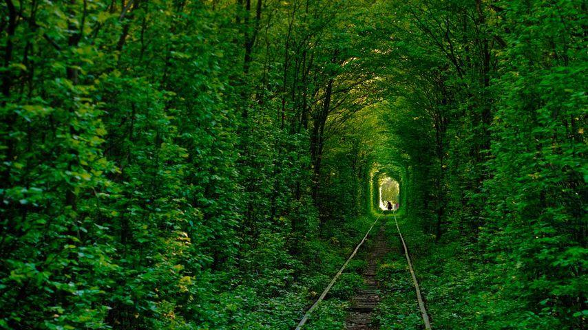 Tunnel de l'Amour de Klevan, Ukraine