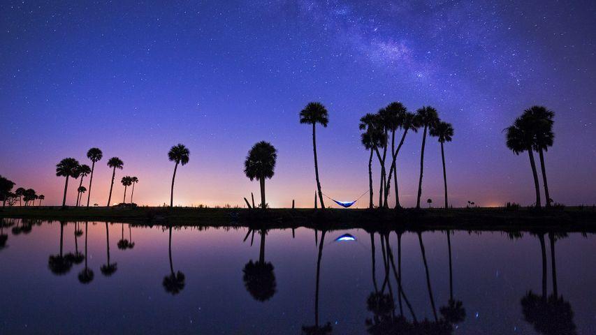Nuit à la belle étoile le long du cours d'eau l'Econlockhatchee, Floriade, États-Unis
