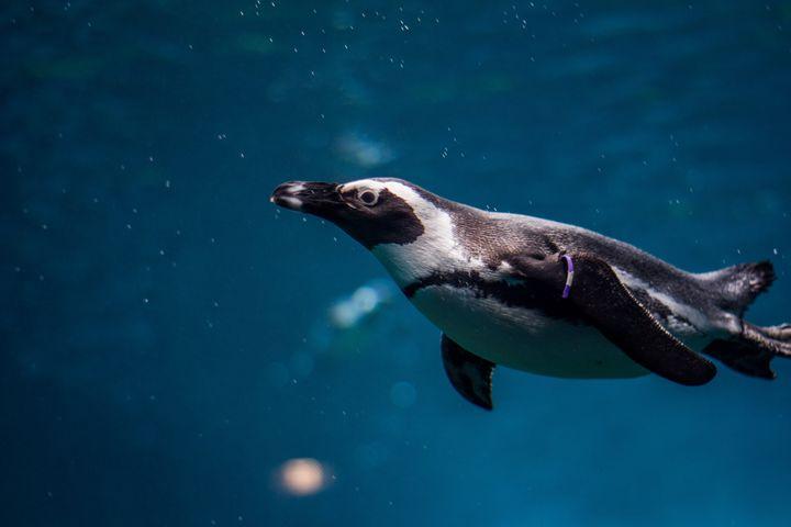 water animal marine mammal outdoor aquarium fish dolphin penguin
