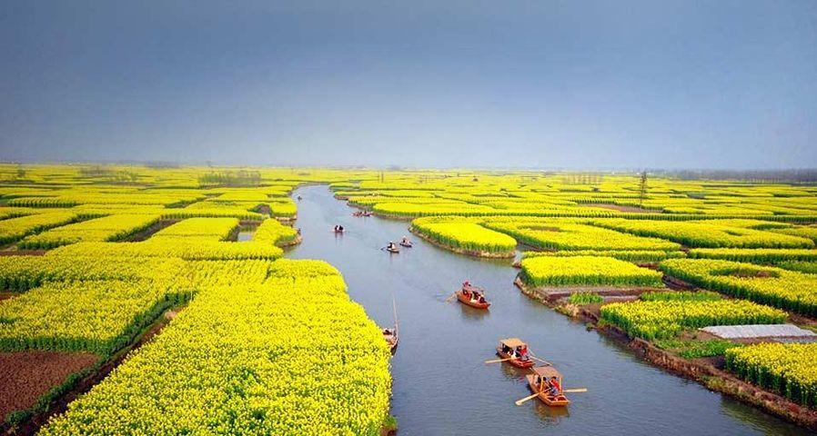 Tourists take boats as they visit an expanse of flowering cole fields near Xinghua city, east China's Jiangsu province