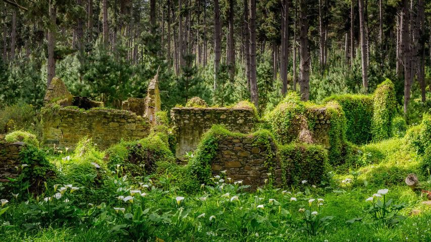 Remnants of buildings in forest, Fleurieu Peninsula, South Australia