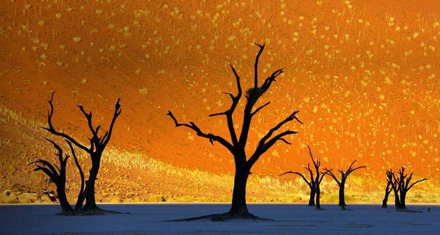 Dead trees in Dead Vlei, Namib-Naukluft Park, Namibia