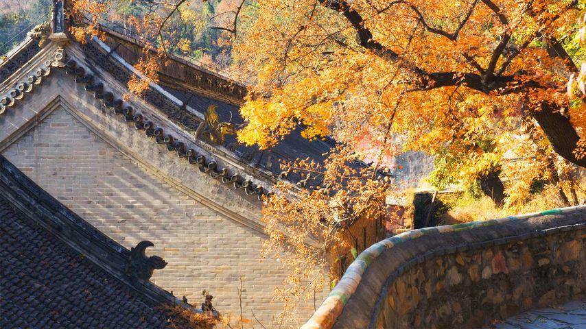 北京潭柘寺秋景