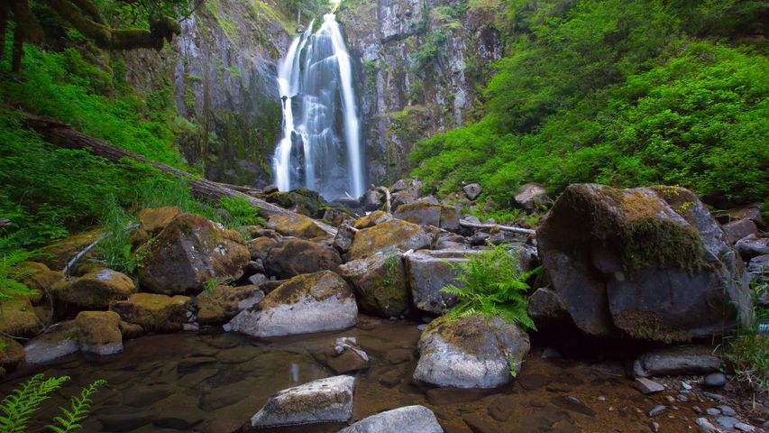 nature tree water outdoor waterfall rock plant river