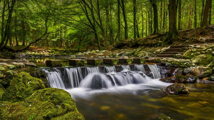 Stepping stones in Tollymore Forest Park, County Down, Northern Ireland