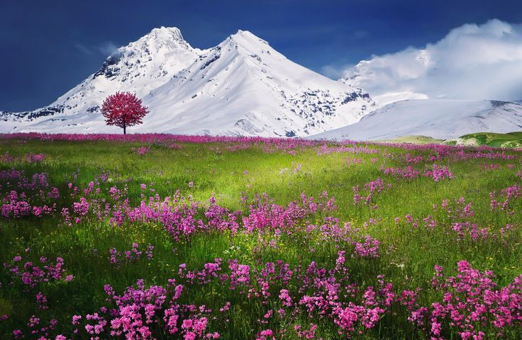 sky outdoor flower plant mountain nature landscape wildflower