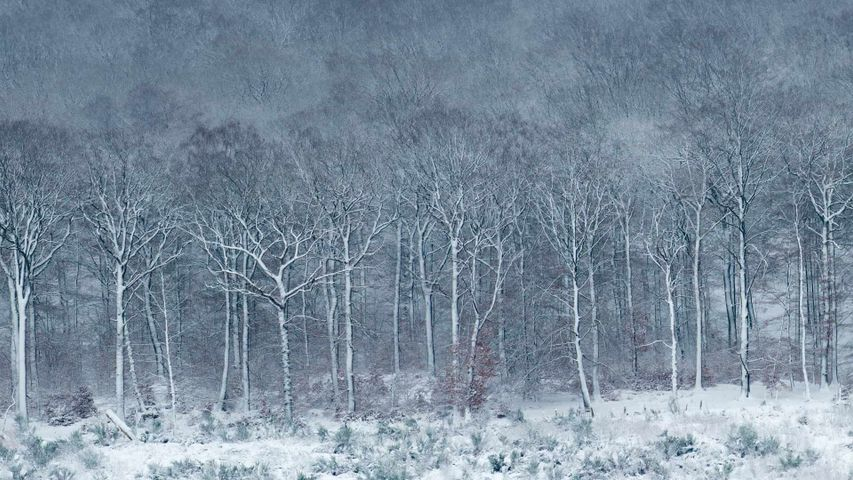 Luzulo-Fagetum beech forest covered with frost and snow, Ardennes, Belgium