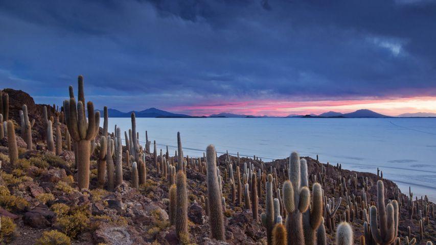 Isla del Pescado on the Salar de Uyuni in Bolivia